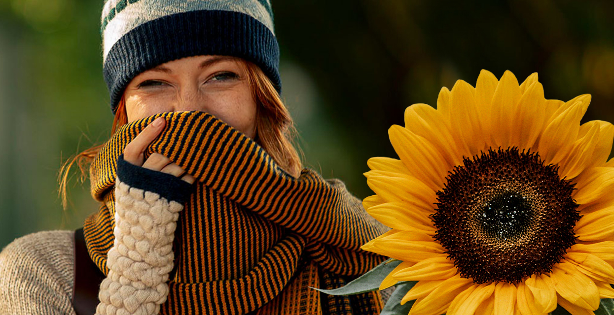 We do love beautiful sunflowers…